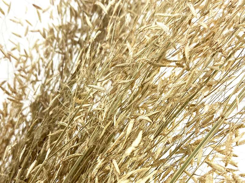 dried-flowers-munni-grass