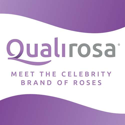 Qualirosa Celebrity Roses by Vianen Flowers