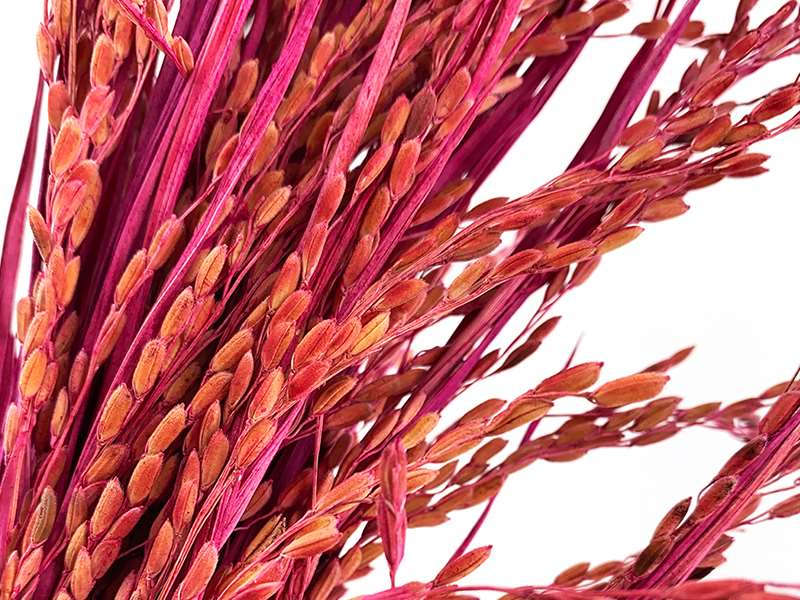 dried-flowers-paddy-grass-wholesale