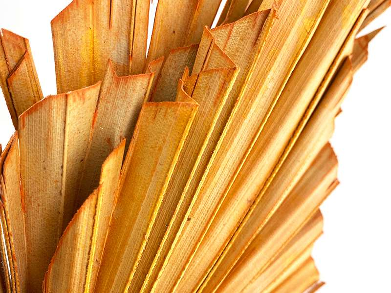 dried-flowers-palm-spear-flower-wholesale